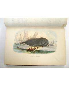 Histoire naturelle de Lacépède comprenant les cétacées, les quadrupèdes ovipares, les serpents et les poissons.(Brussel 1853)