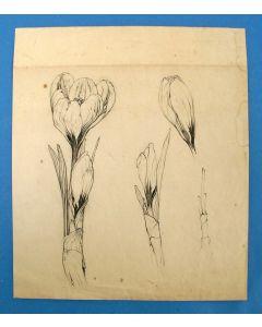 Anton Pieck, Crocussen, tekening, 1925